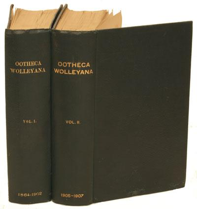 Ootheca Wolleyana