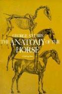 Anatomy-horse