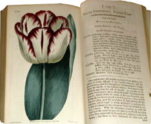 Botanical-Magazine-1