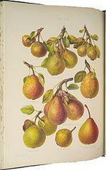 Herefordshire-Pomona-robert-hogg-3